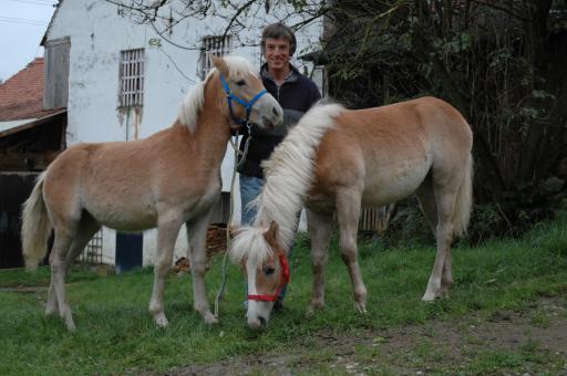Freigekaufte Haflinger-Fohlen Nuja und Nanni mit Dr. Plank