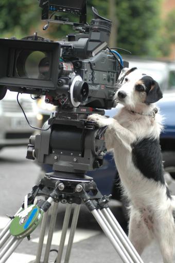 Hauptdartsteller, Hund Ben, filmt gerne selbst.