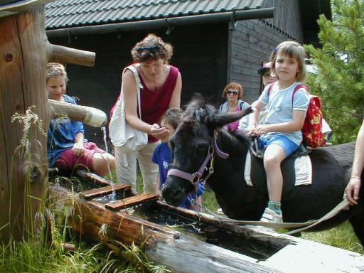 QUAX Familien-Freizeit-Tipp: Familien Eselwanderung im Naturpark Zirbitzkogel-Grebenzen