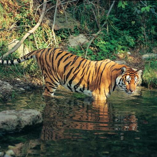 QUAX Familien-Freizeit-Tipp: Sommerferien - Zoobesucher begleiten im Nachtzoo Tierpfleger, die so manchen Schützling mit einer Leckerei überraschen