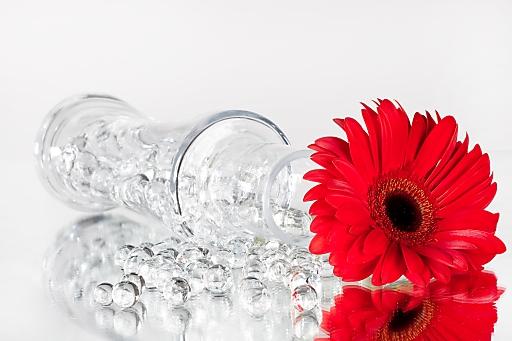 Bild blumenperlen farbige blumenerde bieten ihren for Stylische pflanzen