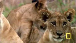Fotocredit: Gorongosa Restoration Project/National Geographic Television