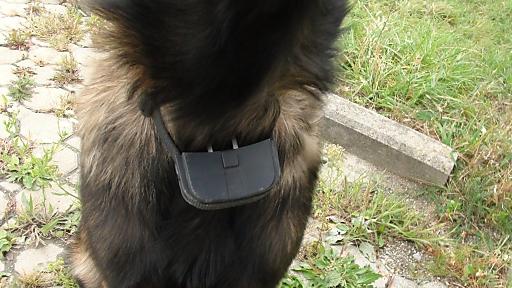 In einem KFZ-Betrieb in Donnerskirchen, (Burgenland) konnte ein Hund von einem Elektroschockgerät befreit werden. Dem 26 Wochen jungen Belgischen Schäfer war die illegale Apparatur um den Hals geschnallt worden, um ihn durch schmerzhafte elektrische Reize abzuhalten, vom Firmengelände wegzulaufen.