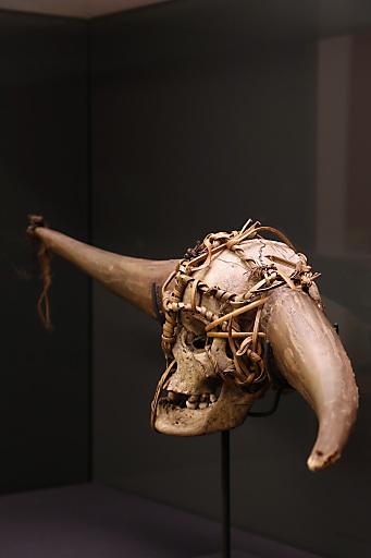 Trophäen(-Büffelhorn)schädel des Phom- oder Konyak-Naga verziert mit mithun-Hörnern (Bos frontalis) (Nagaland oder Arunachal Pradesh, Indien), vor 1911. Sammlung Lucian Scherman, Staatliches Museum für Völkerkunde München