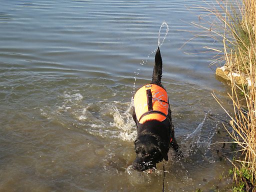 """""""Woofshack"""" richtet sich an aktive Hundebesitzer, die bereits Hundesport mit ihren Vierbeinern betreiben oder neue Sportarten ausprobieren wollen."""