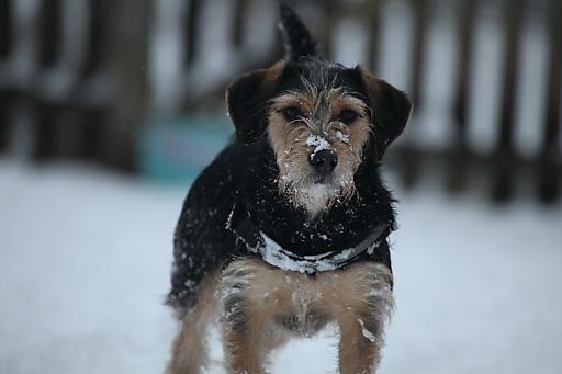 """Hund """"Amanda"""" bei der PFOTENHILFE in Lochen"""
