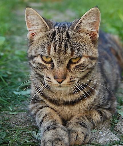 """Zum Weltkatzentag am 8. August verschenkt der Verein """"Tierschutz macht Schule"""" mit dem Cat Care - Packerl Katzenwissen für die ganze Familie: www.tierschutzmachtschule.at"""