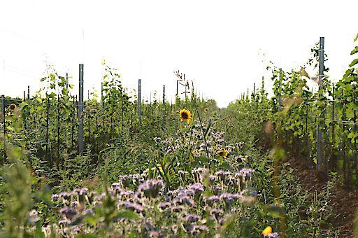 Weingarten, Demeter-Betrieb Michlits