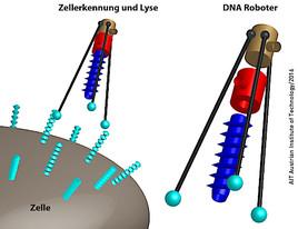 AIT: Molekulare Roboter gegen bakterielle Infektionen