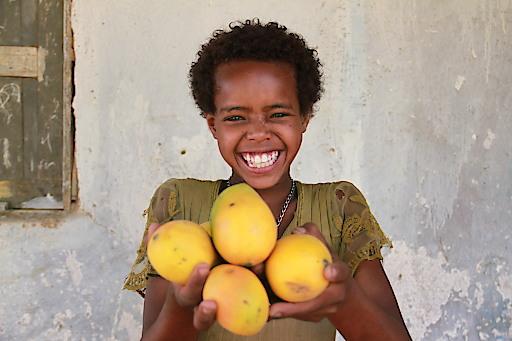 Obstbäume um 10 Euro - Äpfel, Mangos oder Papayas sind Vitaminlieferanten und bringen ein zusätzliches Einkommen. Obstbaumsetzlinge sind eine wertvolle Grundlage für eine bessere Zukunft für die Menschen in Äthiopien.
