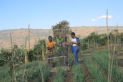 """""""Hilfe zur Selbsthilfe"""" kommt an und wirkt langfristig: Mit Unterstützung der äthiopischen Mitarbeiter lernen die Bauern in den Projektregionen von Menschen für Menschen beispielsweise bessere Anbau- und Bewässerungstechniken kennen."""