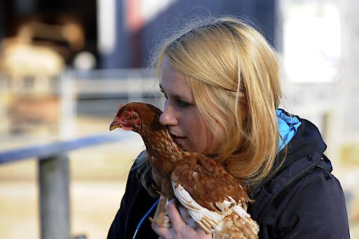 Ostern - kein Fest für Tiere: PFOTENHILFE zeigt schockierende Bilder geretteter Legehennen