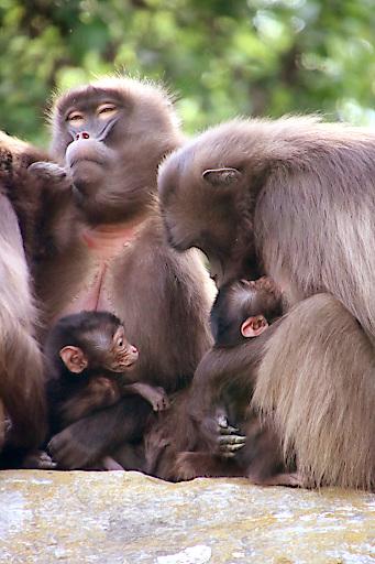 Dschelada Mamas Makini und Yuna mit Babys