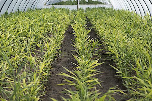 LGV-Frischgemüse und Seewinkler Sonnengemüse präsentieren Innovationen im Gemüsegeschäft