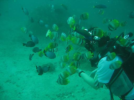 Meeresbiologen bei der Arbeit