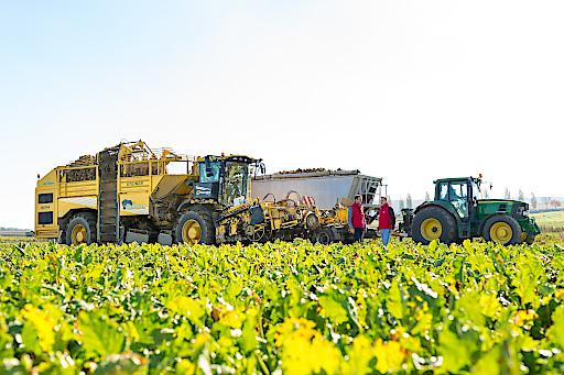 AGRANA - Zuckerrüben Landwirtschaft Traktor Rübentransport