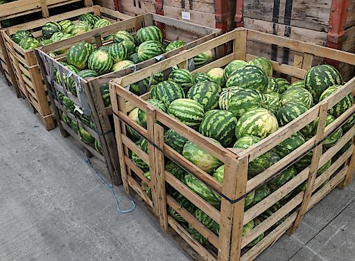4 Tonnen Wassermelonen, nur ein Bruchteil von dem was dieses Jahr auf österreichischen Feldern liegen bleiben musste