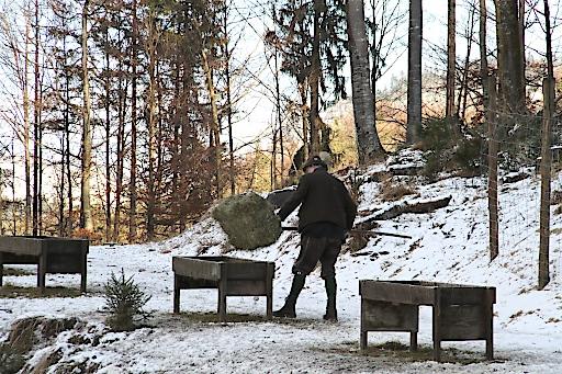 Winterfütterungen für Wildtiere sind überlebenswichtig