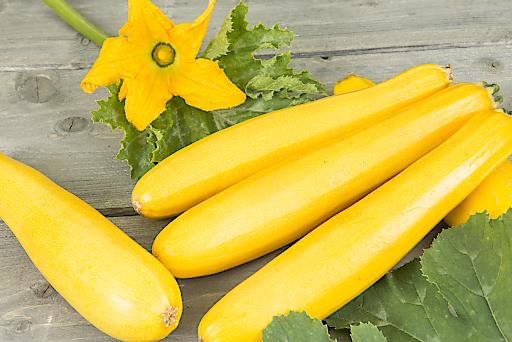 Aromatische Früchte bringt das Gemüse des Jahres Jeanny Zucchini