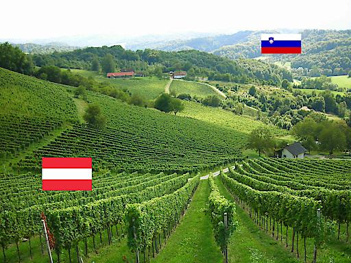 Die Ried Zieregg in der Südsteiermark, ein Weingarten an der slowenischen Grenze, © ÖWM/Gerhard Elze