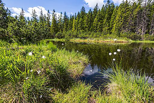 Am Gerzkopf in Eben befindet sich das gleichnamige Europa- und Naturschutzgebiet mit Moorsee