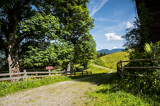 """Der """"Weg der guten Wünsche"""" in –Flachau eignet sich bestens für Familien und führt durch Wälder, Alleen und Wiesen."""