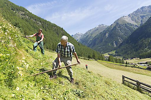 Freiwillig am Bauernhof mithelfen: Besondere Erfahrung in der Bergwelt Nord- und Osttirols.