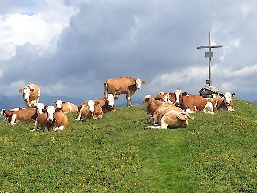 Immer wieder kommt es vor, dass man beim Wandern auf Kühe am Wanderweg trifft. Die Naturfreunde Österreich haben für solche Fälle einen Folder mit Verhaltensregeln herausgebracht.
