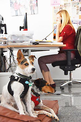 Hunde können im Büro sehr bereichernd sein - für Mensch und Tier