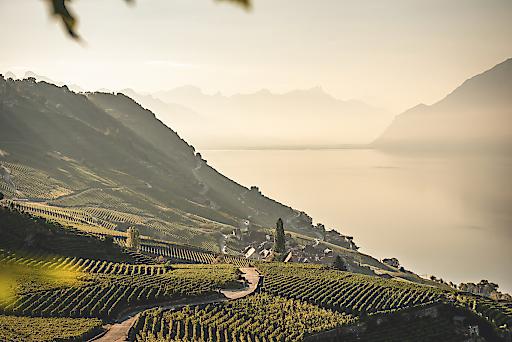 Bio-Weinbauer Blaise Duboux gehört zur Bruderschaft Confrerie des Vignerons, die alle 20 Jahre das Fete de Vignerons in Vevey organisieren. Hier beim Ausblick über die Weinberge des Lavaux.