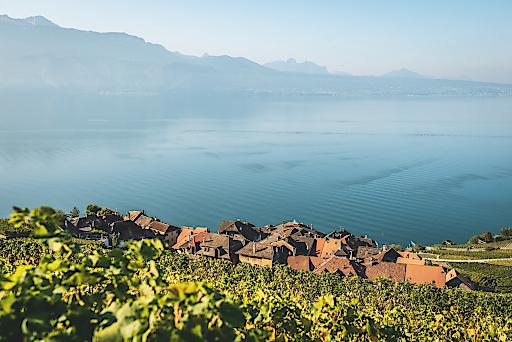 Das typische Weindorf St-Saphorin mitten im Lavaux mit dem Genfersee Panorama.