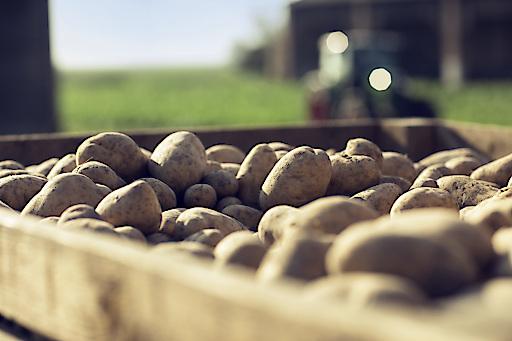 Erdäpfel erfreuen sich nicht nur als Frischware großer Beliebtheit, sondern nehmen auch im Tiefkühlregal einen immer höheren Stellenwert ein.