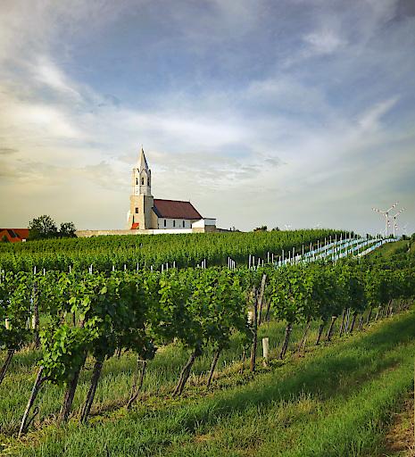 Weingarten in Höflein