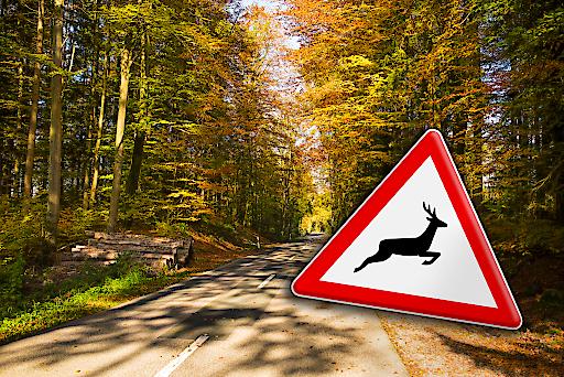 Der Herbst naht und die Gefahr von Unfällen durch Kollision von Fahrzeugen mit Tieren auf öffentlichen Straßen steigt. Jährlich ereignen sich im österreichischen Straßenverkehr ca. 300 Wildunfälle mit teilweise schlimmen Folgen. www.tuvaustria.com/automotive
