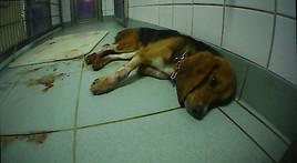 Undercover in Deutschlands geheimsten, privaten Tierversuchslabor