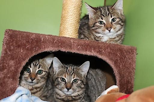 Drei Katzenkinder bei Müllcontainern in Ranshofen ausgesetzt