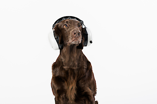 Silvesterangst bei Hunden - Jeder zweite Hund in Österreich reagiert ängstlich auf Geräusche.