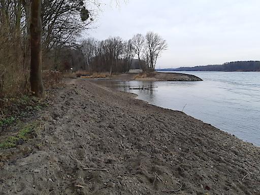 In den Herbst- und Wintermonaten 2019 setzte viadonau flussbauliche Maßnahmen zur naturnahen Neugestaltung der Flussufer.