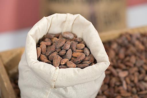 Kakaobohnen - Manner stellt auf zertifiziert nachhaltigen Kakao um