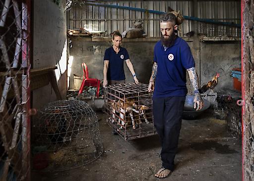 Das VIER PFOTEN Team bei einer Hunde-Rettung in Kambodscha