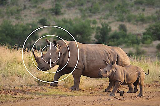 Grausame Jagd-Safaris dürfen in Österreich legal verkauft werden.