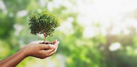FH Kufstein Tirol setzt Zeichen durch Nachhaltigkeits-Strategie