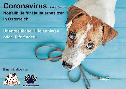 Hilfe bei der Betreuung Ihres Haustieres durch Freiwillige