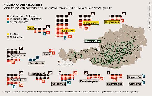 Neue Publikation: Österreichischer Insektenatlas 2020 rüttelt auf