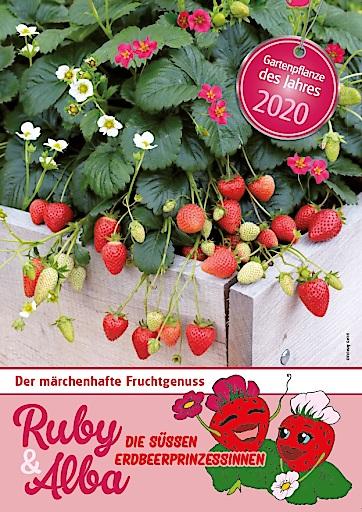 Alba mit weißen Blüten und Ruby in Pink bilden die Gartenpflanze des Jahres