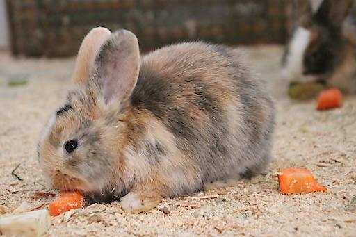 Kaninchen Bunny im Streichelzoo