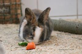 Tierwelt Herberstein: (Oster)Hasen-Geburt