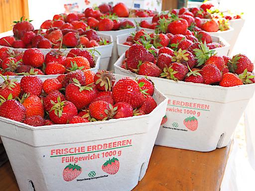 Erdbeeren zählen zu den Lieblingsfrüchten der Österreicher.