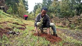 5 Milliarden Bäume für eine grünere Zukunft