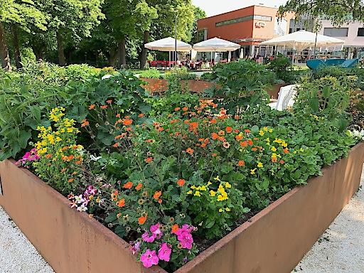 Der Gustav Klimt-Garten und das Gustav Klimt-Zentrum am Attersee
